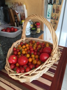 Fresh from the garden